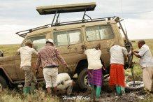 serengeti-stuck