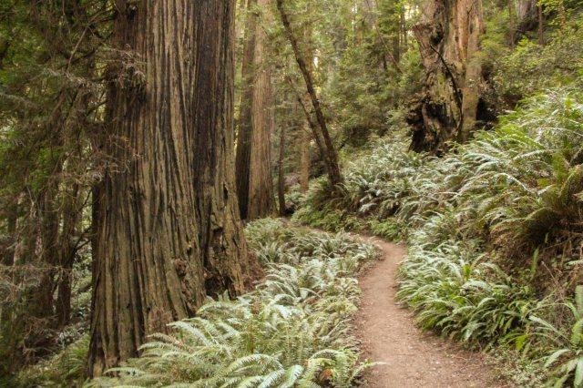 Redwood - With White Balance-5442