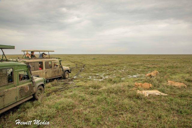 Serengeti Camping-1826