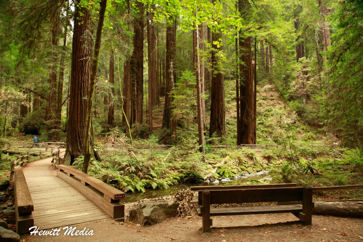 National Monuments - Muir Woods National Monument and San Francisco Guide