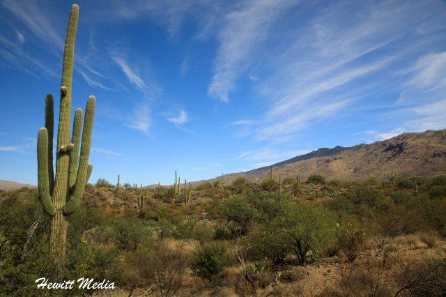 Saguaro-5984.jpg