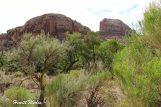 Canyonlands National Park-4190